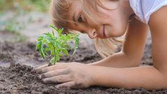 Dieses Bild zeigt ein Kind, welches eine Pflanze im Garten pflanzt.